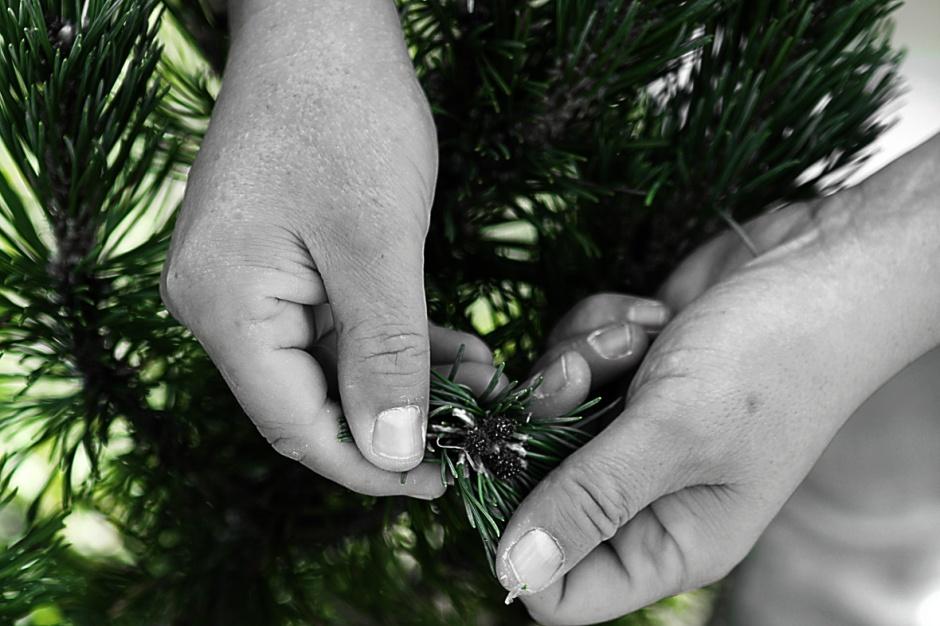 Alessandro Gilmozzi coglie i doni del bosco foto Eugenio Del Pero